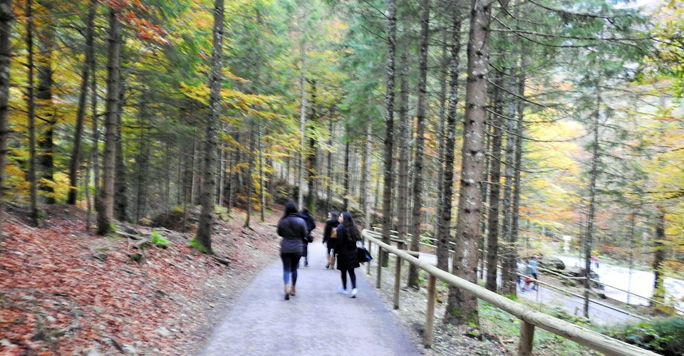 neuschwanstein-walking-path